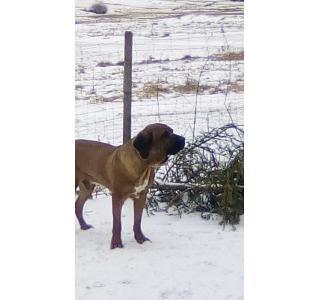 Paco avec la neige