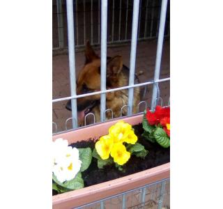 Iala et les première fleurs